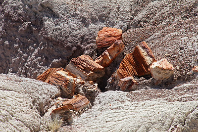 Petrified logs on the east side of the Blue Mesa loop.
