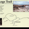 """<span style=""""color:yellow;""""> For our last activity, we hiked the Long Logs Loop and Agate House Trails near the southern entrance to the park.  </span>"""