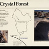 """<span style=""""color:yellow;""""> And, next, the Crystal Forest.  </span>"""