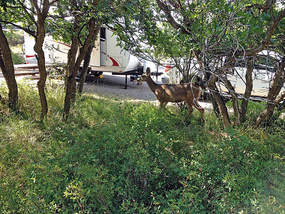 We had frequent visitors in our campground site.