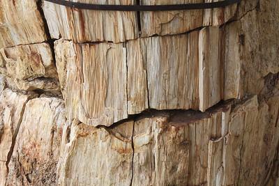 Fossilized Redwood wood.
