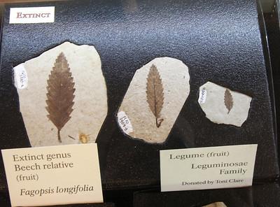 Fossils of extinct species.