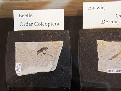 Insect fossils.  The lack of clarity is due to the very poor lighting in the visitor center displays, and hence long exposures.