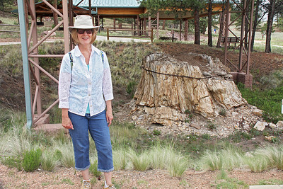 Fossilized redwood  ... the stump, not the lady.