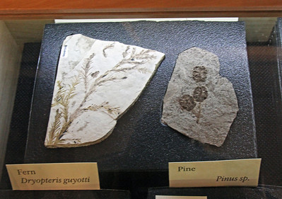 Some of the many fossils on display in the visitor center.