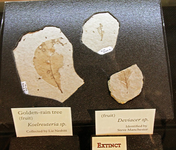 Fossils, visitor center, Florissant Fossil Beds National Monument.