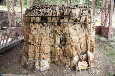 Fossilized Redwood stump.