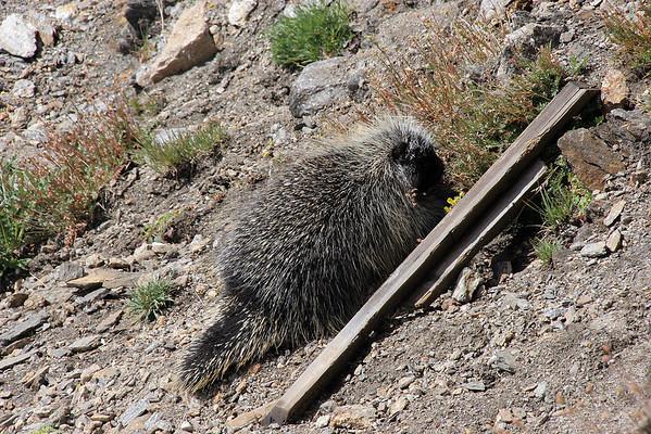 Rocky Mountain National Park & Boulder Colorado