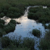 """<span style=""""color:yellow;"""">Late light on the beaver pond.  </span>"""
