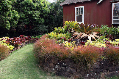 A wide variety of Bromeliads.