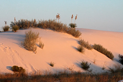 The warm color of the dunes is actually due to the sunrise ... as we will see, in midday sun they are extremely white.