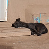 """<span style=""""color:yellow;""""> My favorite photo from our Taos Pueblo visit.  </span>"""