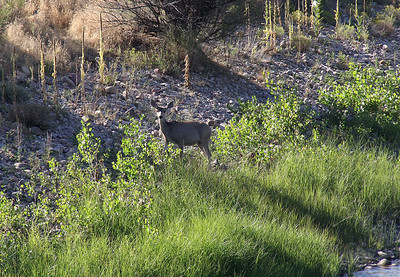 A bit of wildlife by the bridge which crosses the Green River just southeast of our campground.
