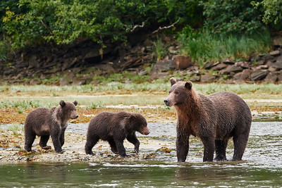 Brown Bear Mom and Cubs 2
