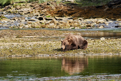 Lazy Brown Bear on Break