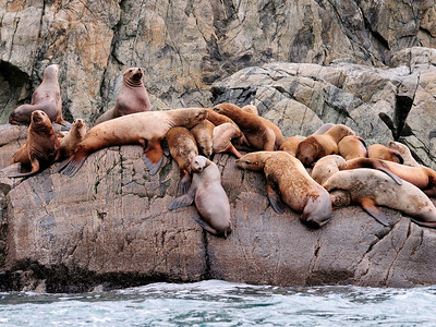 Sea Lion clan