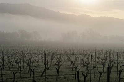 Napa Valley Landscape in Winter Fog 2