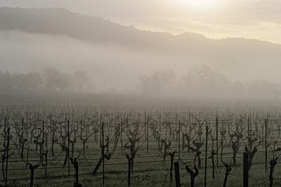 Napa Valley Landscape in Winter Fog 2