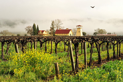 Napa Valley Landscape in Winter Fog 3