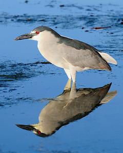 Waikoloa Heron 2