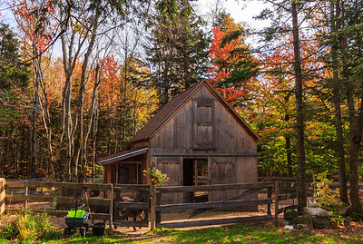 Barn that houses three miniature donkeys and chickens