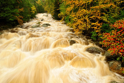 Raging Stream in Autumn 2