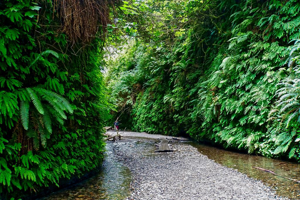 Fern Canyon Prairie Creek Redwoods State Park