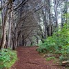 Waihou Spring Trail