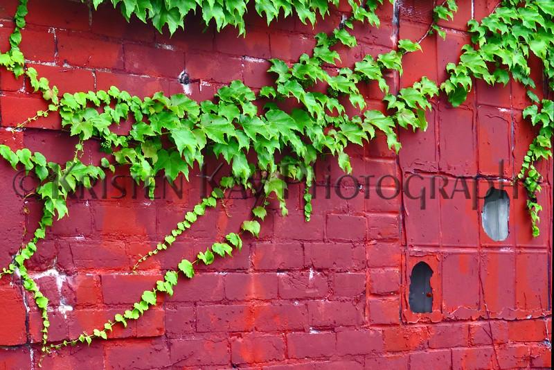 Ivy wall kk_013z