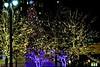 Detroit cmas lights2015_012