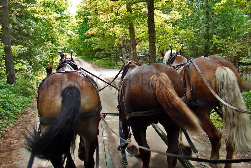 3 horses MckIs  S_003hs