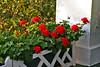 Grand Latticed Flowers_012