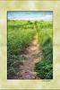 LK MI path_001psmatsig