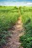 LK MI path_001ps