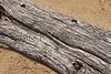 Driftwood_007