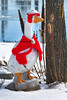 Red Cape Duck_002p