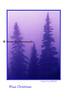 blue pines_002blpnkoiltexture cmas