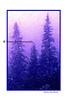 blue pines_002blpnkchalk trad wht