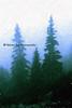 blue pines_002bwbl criscros