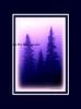 blue pines_002blpnkoil blk