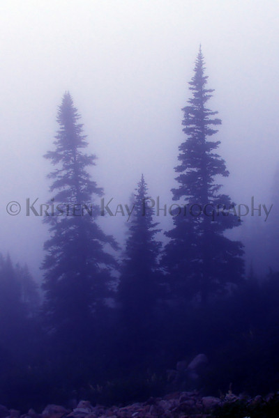 blue pines_002