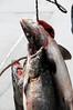 Juneau fisherman_002