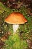 juneau mushroom_001
