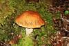 juneau mushroom_002