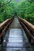 bridge rainforest_001