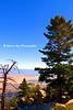 pine view Tram_002
