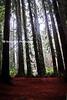 dark fog forest_002mpkrpyt