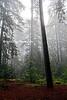 dark fog forest_008p