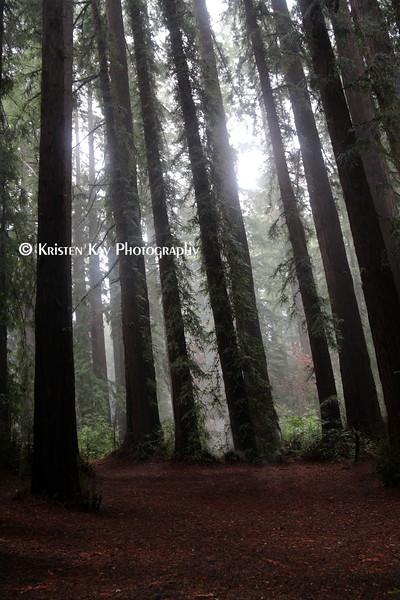 dark fog forest_002