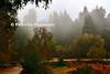 Redwood scene p